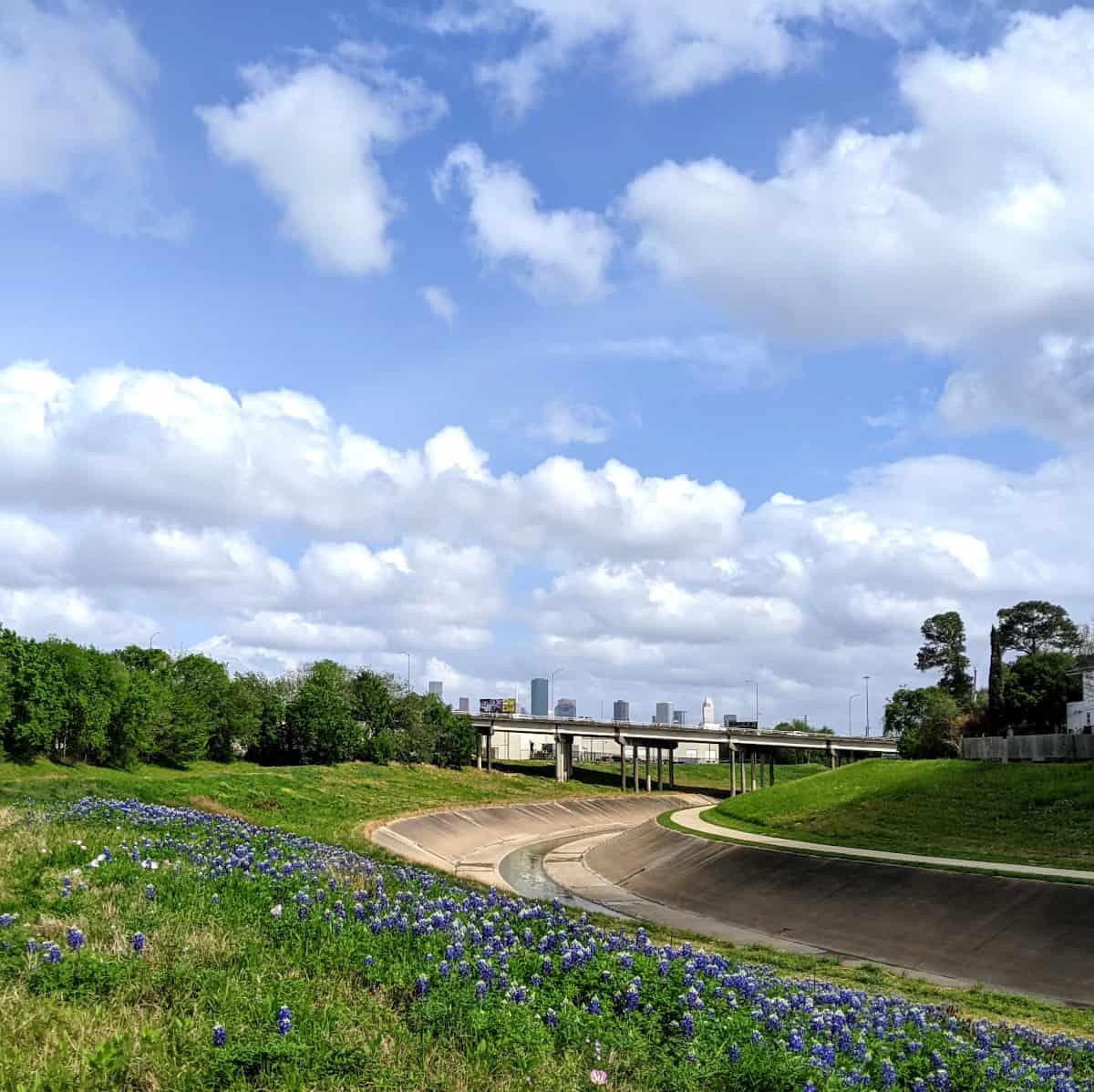 Bluebonnets at White Oak Bayou