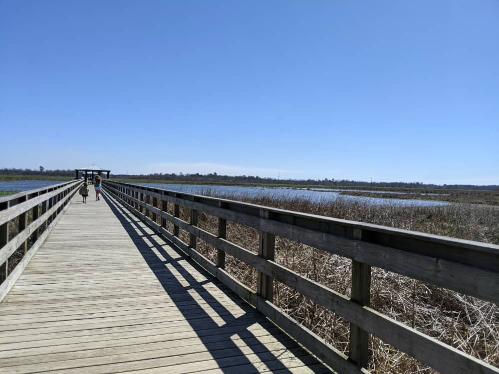 Cattail Marsh Things to do in Beaumont