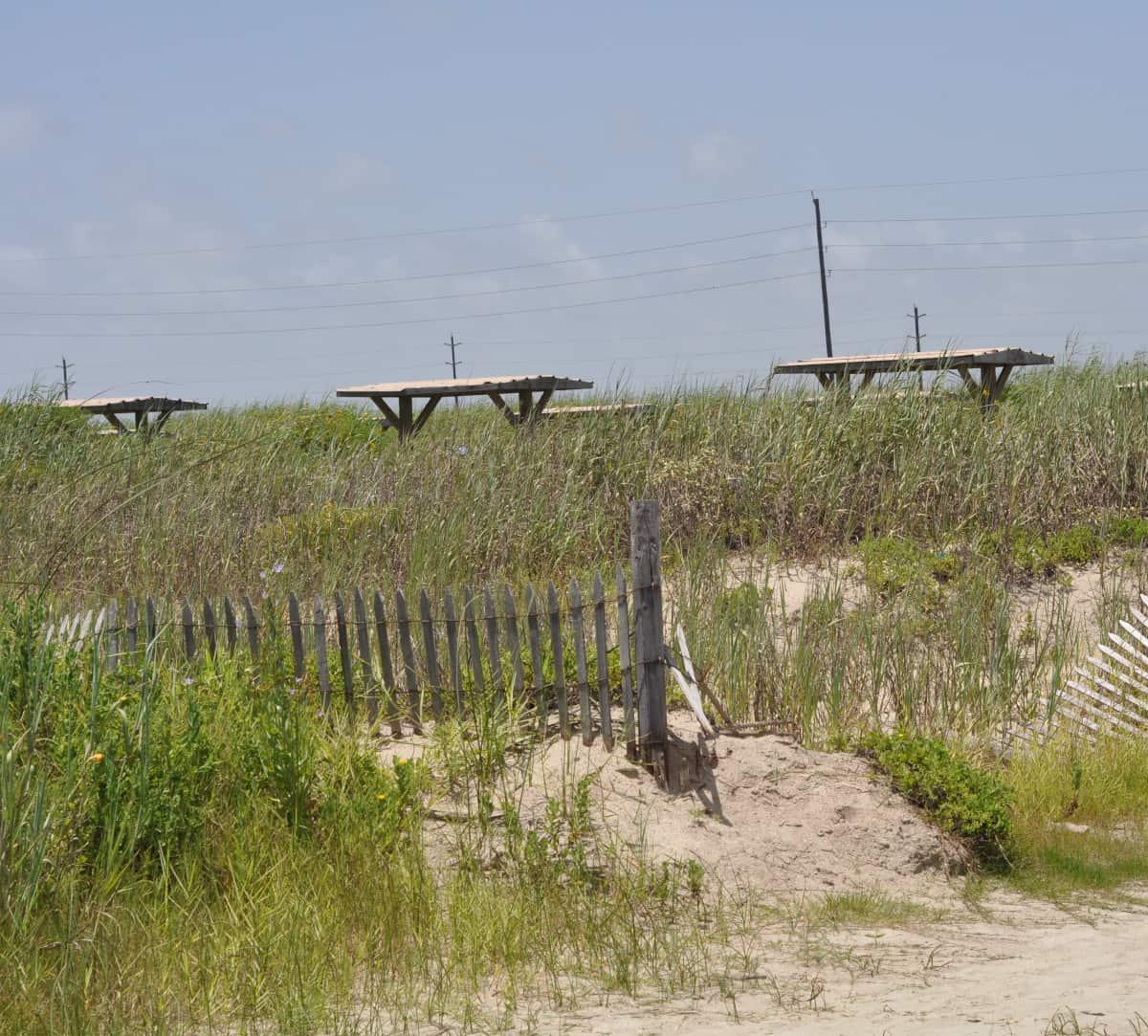 Galveston Island State Park Dunes