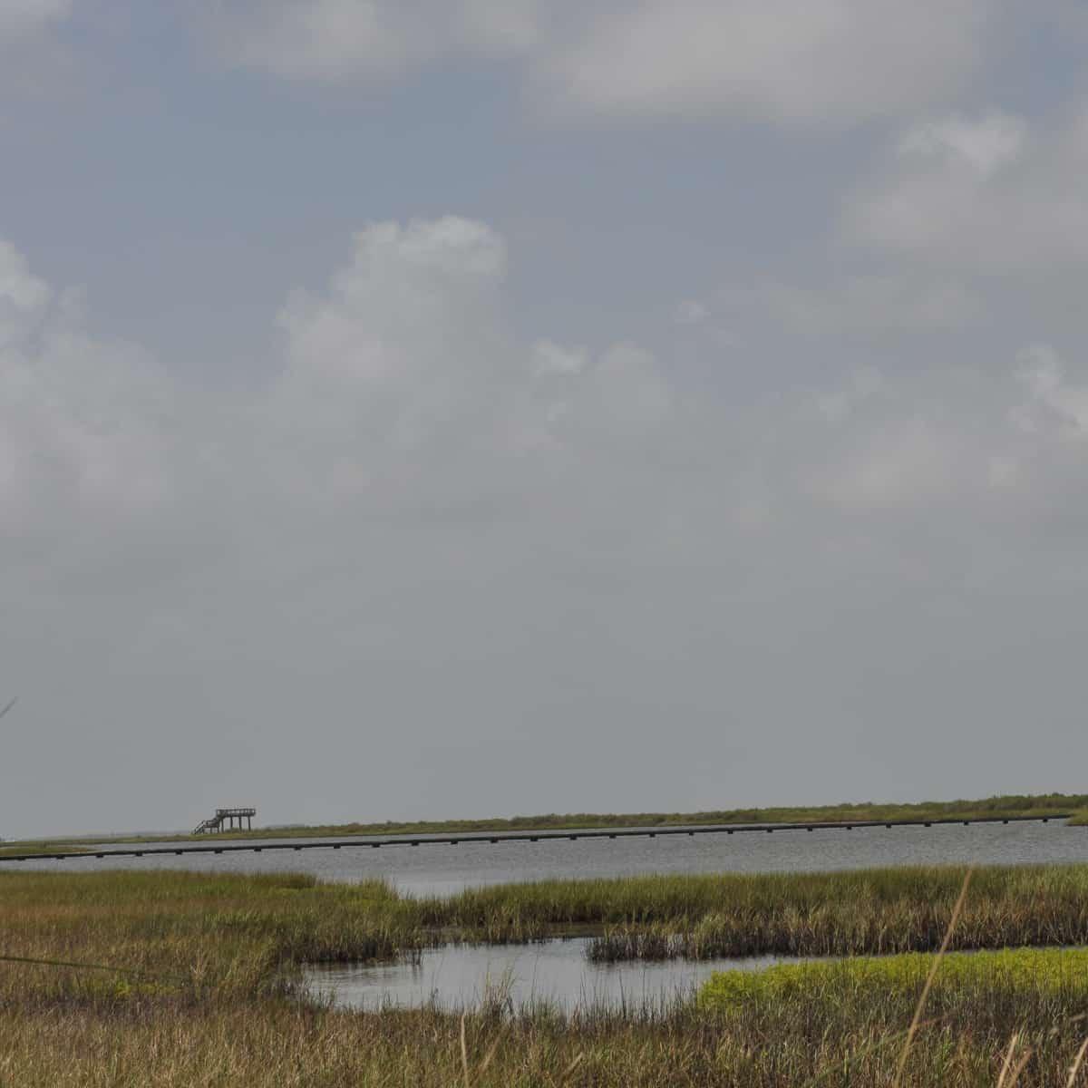 Galveston Island State Park Bay Side