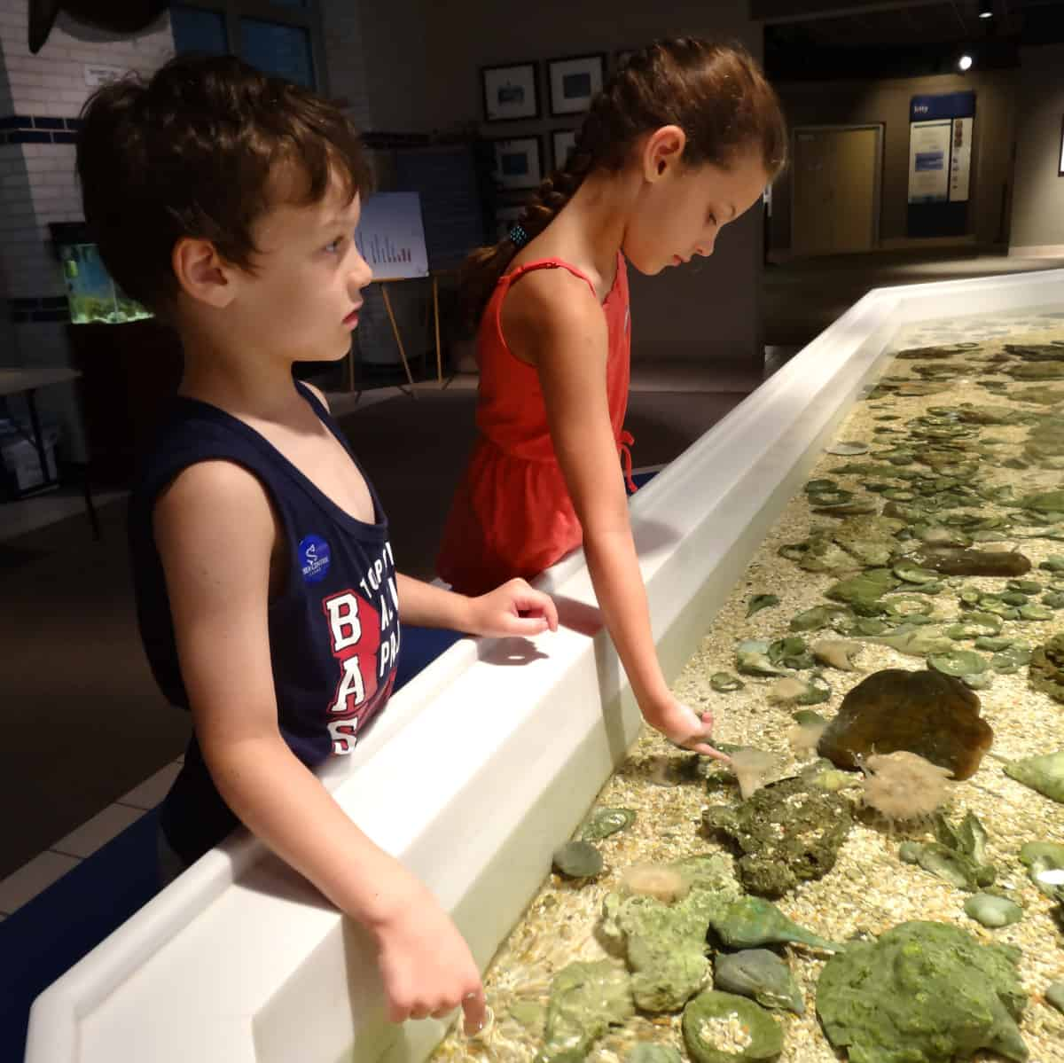 Touch Tank at Sea Center Texas