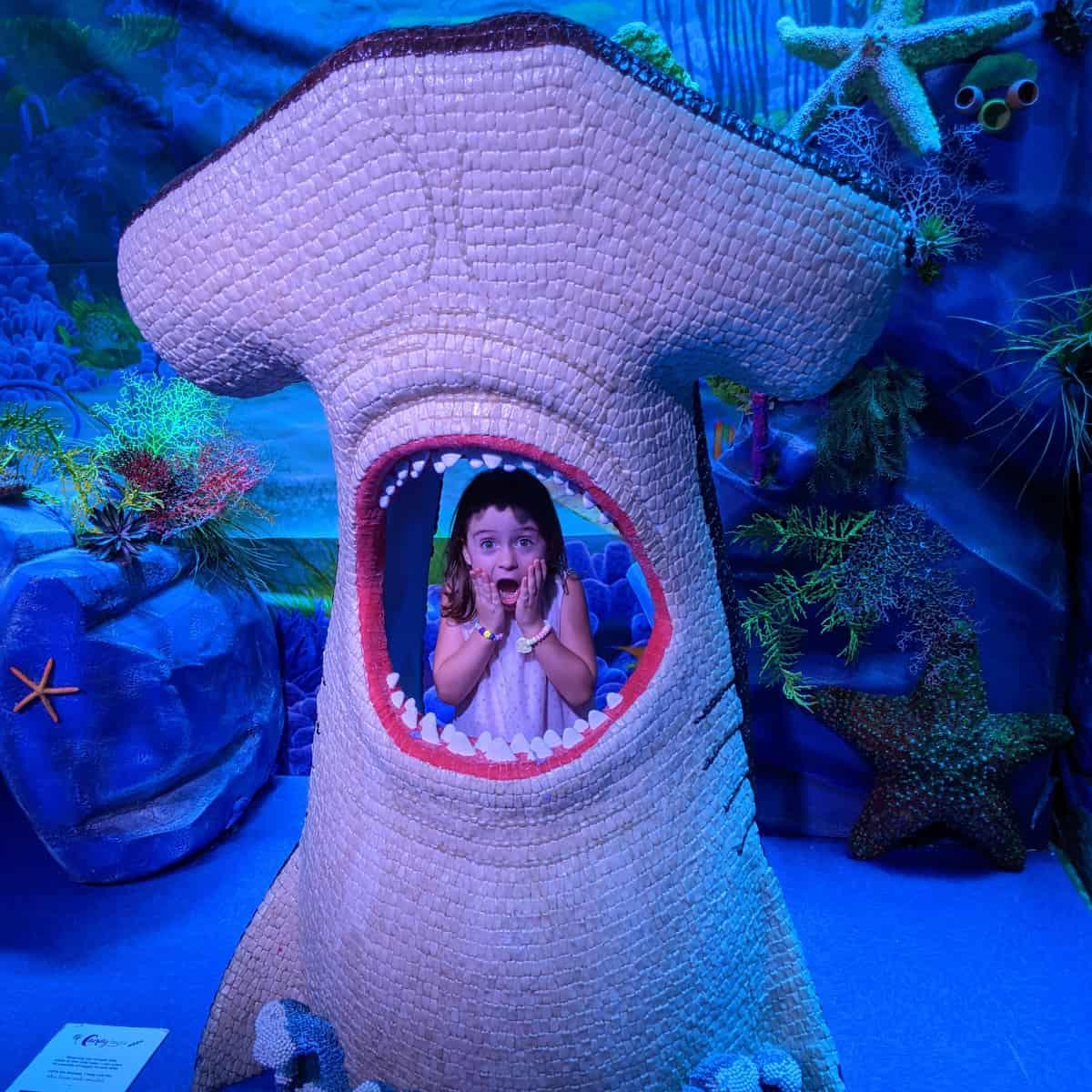 Candytopia Shark