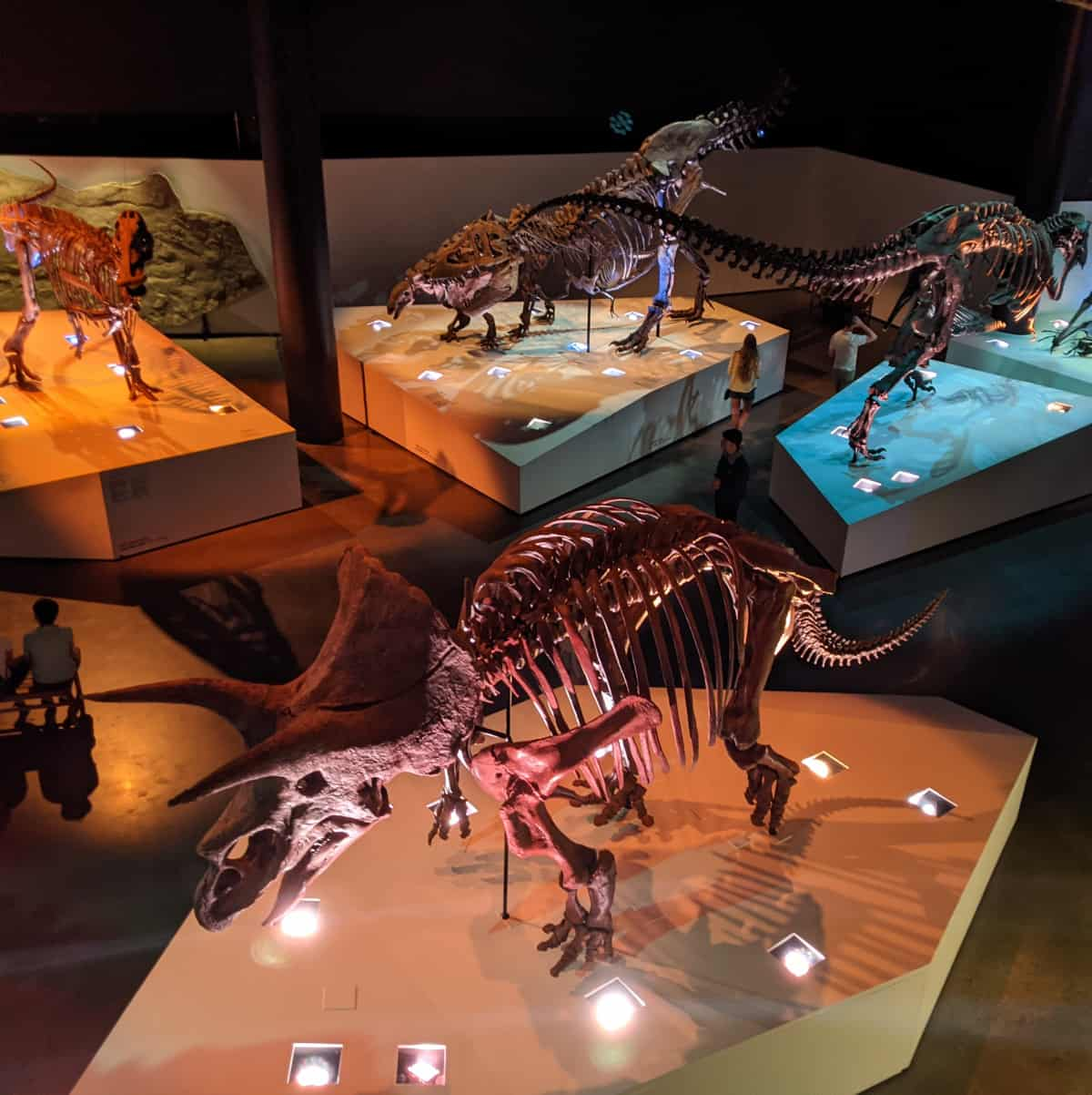 Paleo Hall at Houston Museum of Natural Science