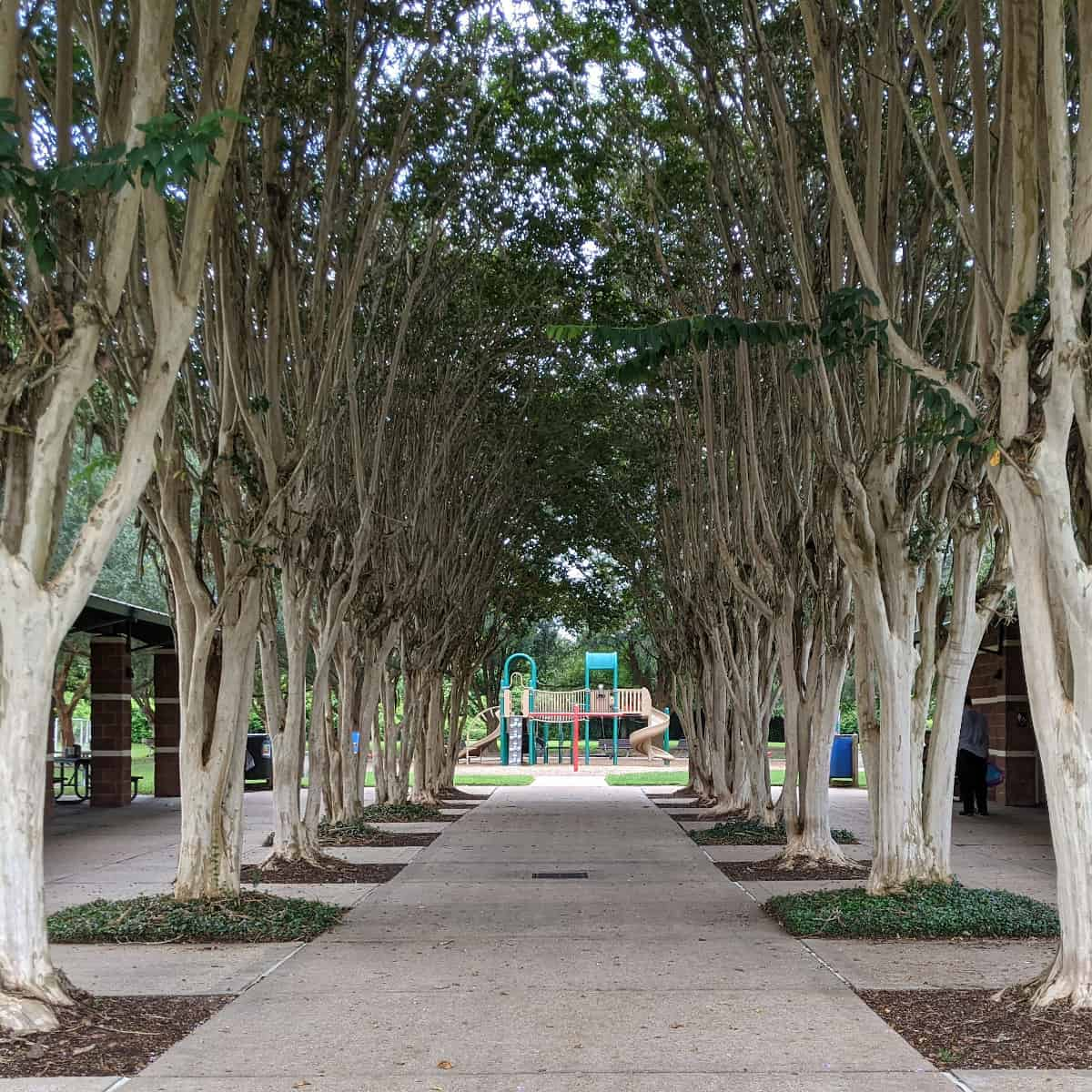 Lost Creek Park Sugar Land Trees and Playground
