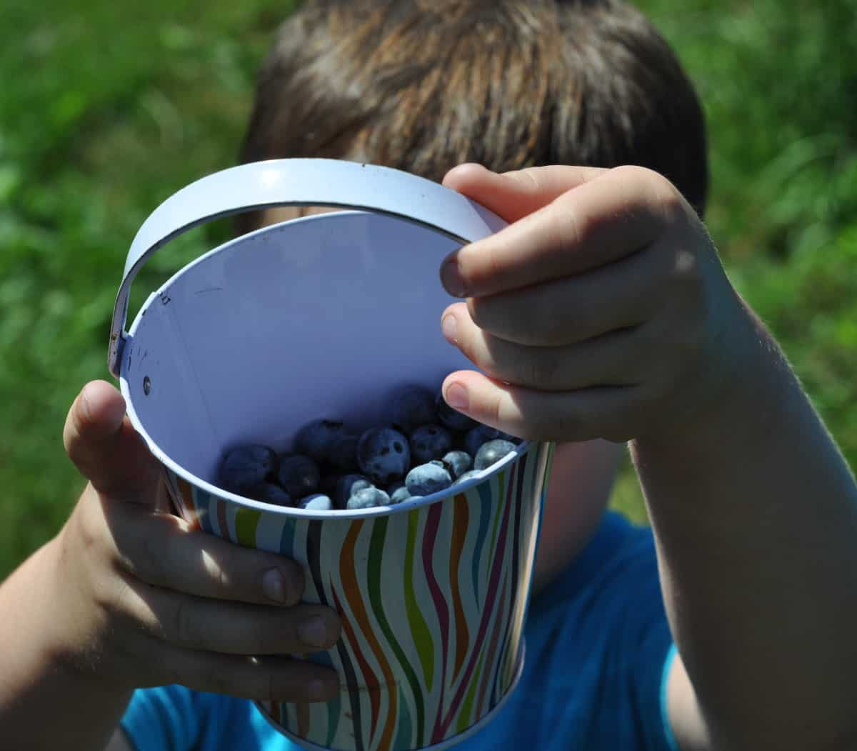 Blueberries in Bucket